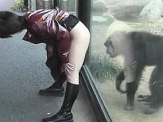 The monkey soon fuck his mistress